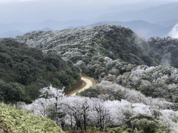 Nhiệt độ xuống thấp khiến hiện tượng băng giá xuất hiện ở đỉnh Phia Oắc, huyện Nguyên Bình, tỉnh Cao
