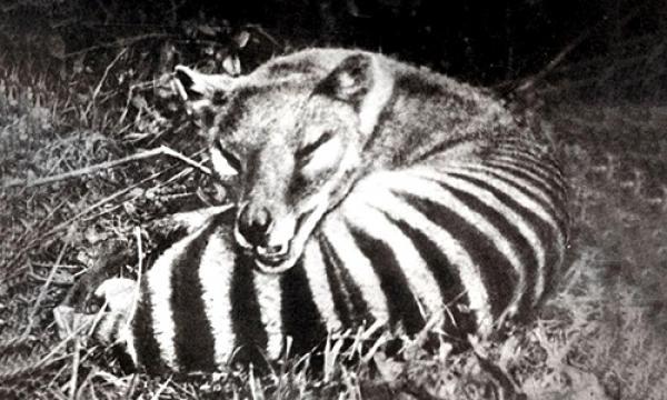 Những loài động vật tuyệt chủng trong một thế kỷ qua