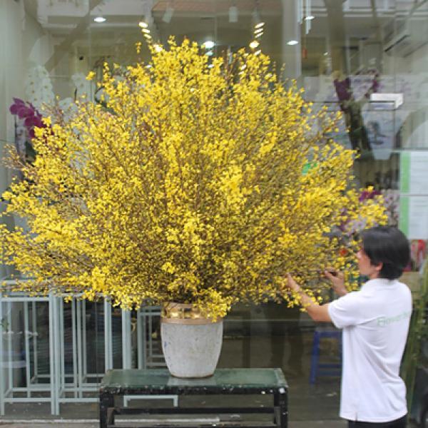 Bình hoa mai Mỹ rực rỡ có giá 70 triệu đồng thích hợp bày trong những không gian rộng.